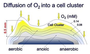 The O2 removal up to the anoxic zone (Image: Mulit Umwelttechnologie)
